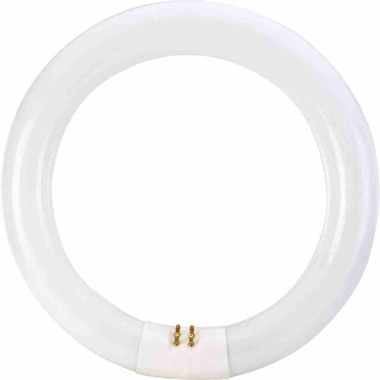 Philips 22W 8 In. Cool White T9 4-Pin Circline Fluorescent Tube Light Bulb Image 3